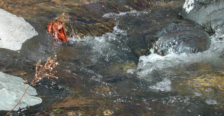 oak-creek7.jpg