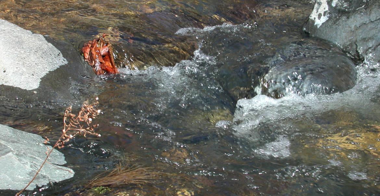 oak-creek7-hi-res.jpg